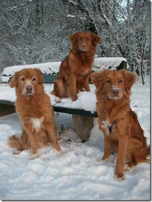 10-12-21-winter-hunde-MD003183-I