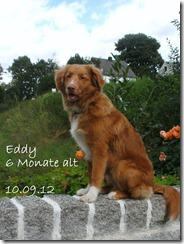 12-09-10-eddy-BILD0777-001