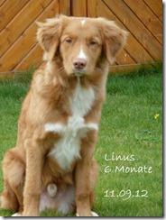 12-09-11-Linus2 073-001