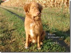 12-09-12-epson-358