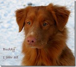 13-02-10-buddy-image-1