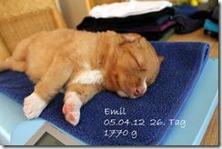 IMG_1718_emil-001