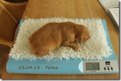 IMG_6896-feline-001