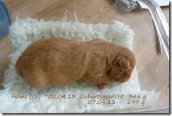 P1100287-f2-feline-001