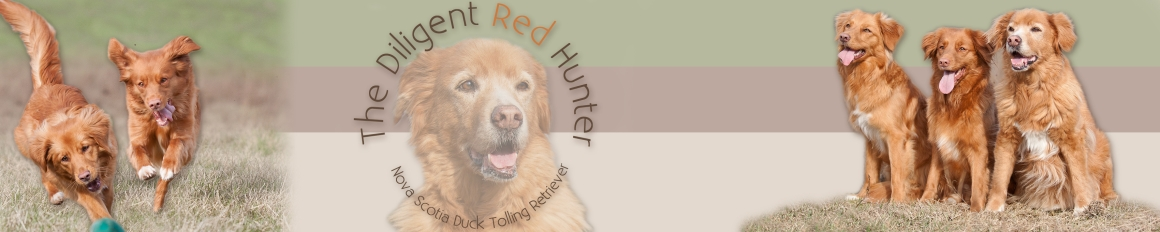 The Diligent Red Hunter